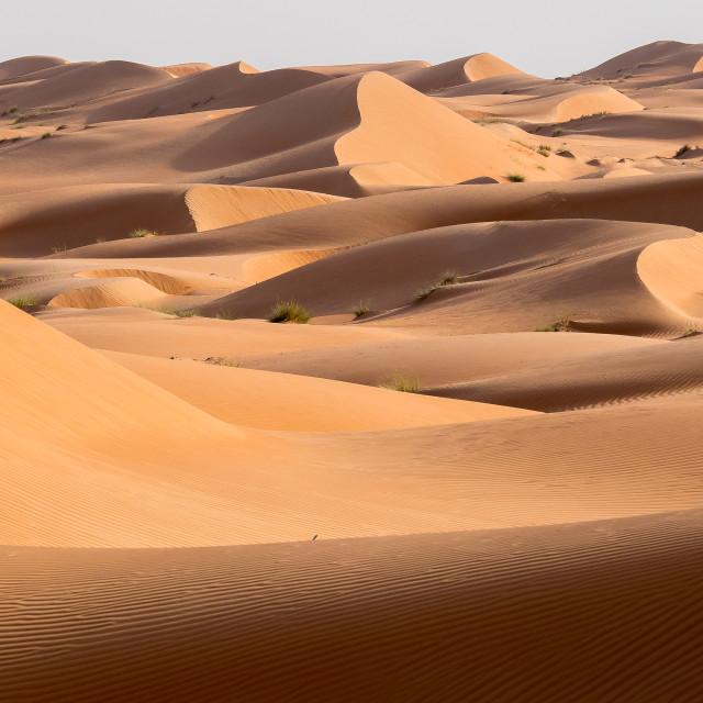 """Wahiba sands, Oman desert"" stock image"