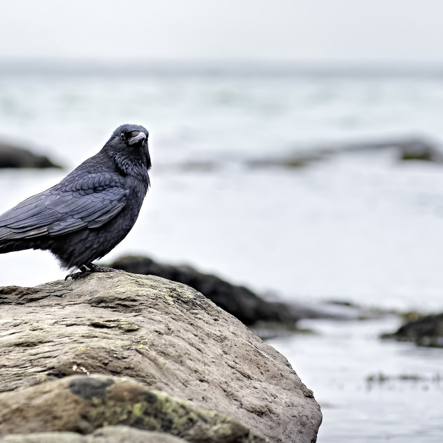 """Lynmouth Crow at Lynmouth Harbour Bay"" stock image"