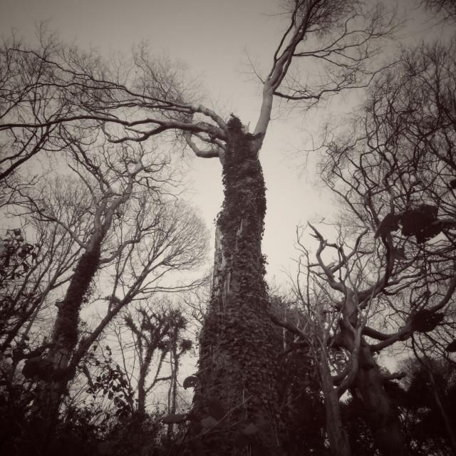 """Spooky tree"" stock image"