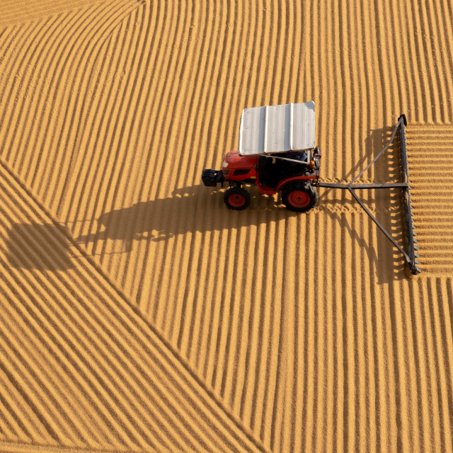 """tractor flattening cracked wheat for drying"" stock image"
