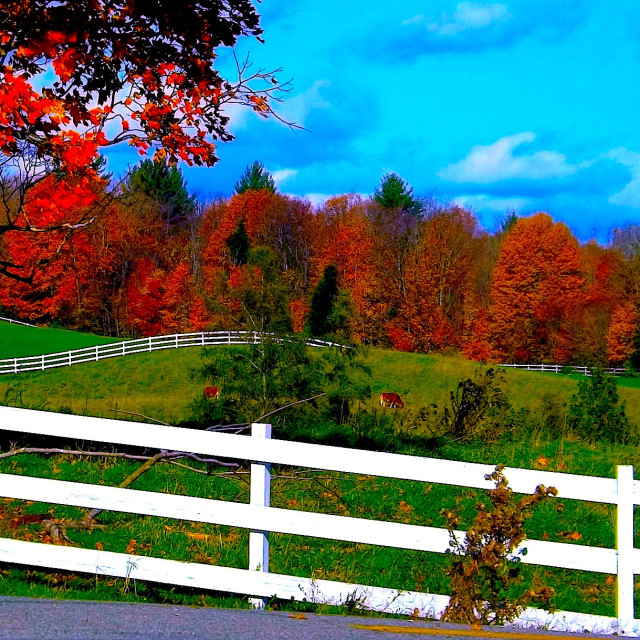 """FENCES AND FOLIAGE IN VERMONT"" stock image"