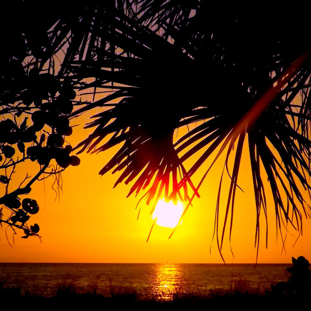 """SUNSET THROUGH THE PALMS - GULF COAST"" stock image"