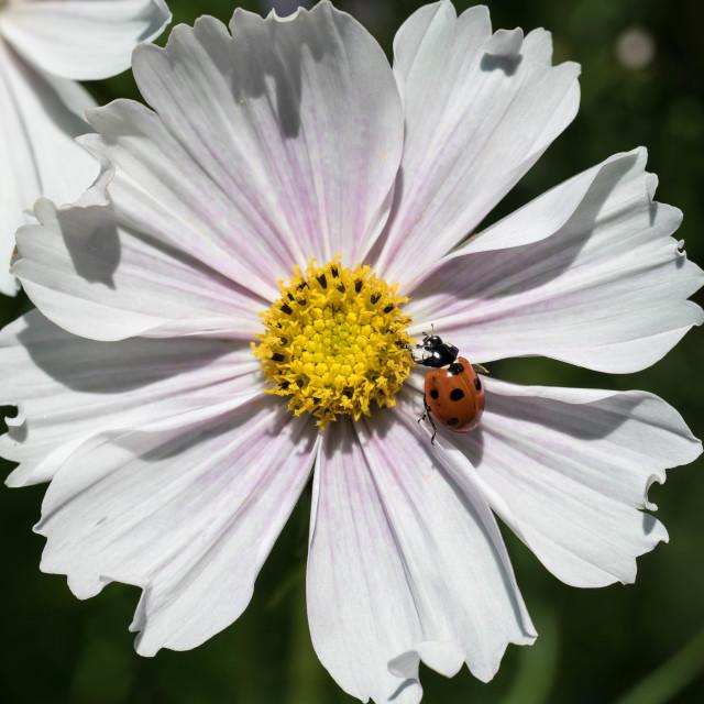 """ladybug"" stock image"