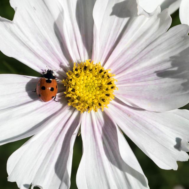 """bugs life"" stock image"