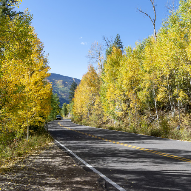"""""""Flowering aspen trees in the Independence Pass, Colorado, USA"""" stock image"""