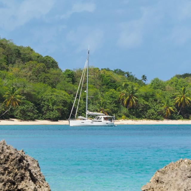 """Catamaran moored in Guadeloupe"" stock image"