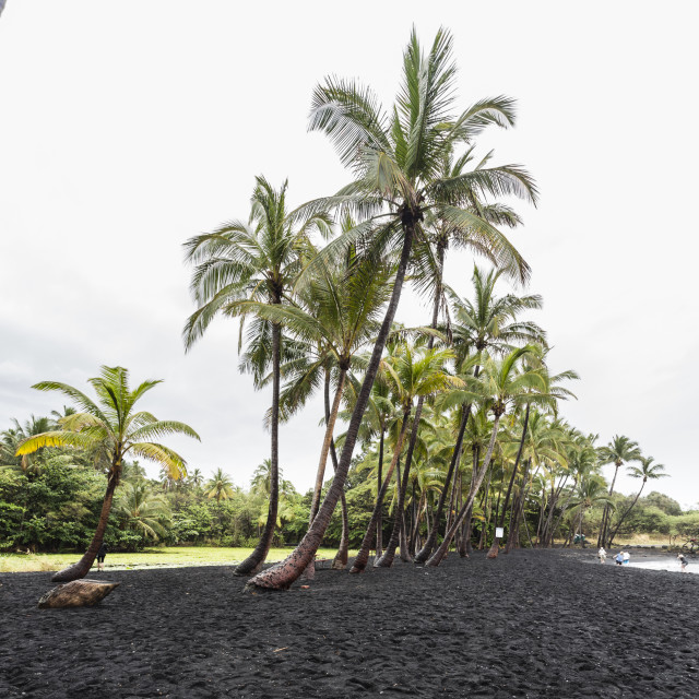 """Punaluu black sand beach, Hawaii"" stock image"
