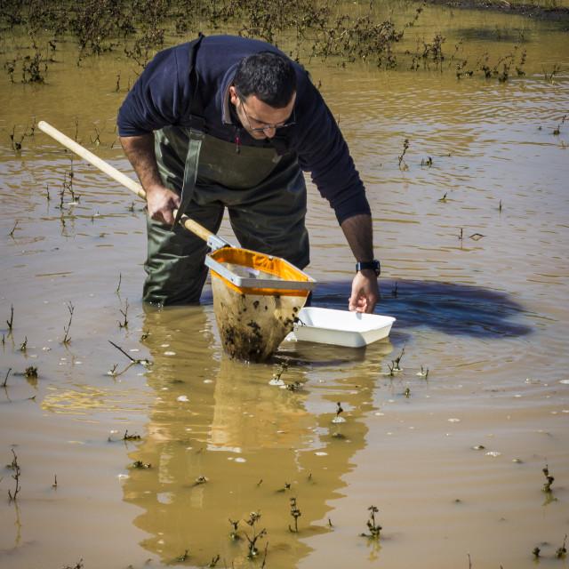 """Scientist sampling for biota in a wetland"" stock image"