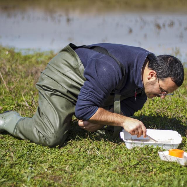"""Scientist sorting biological net samples at a wetland"" stock image"