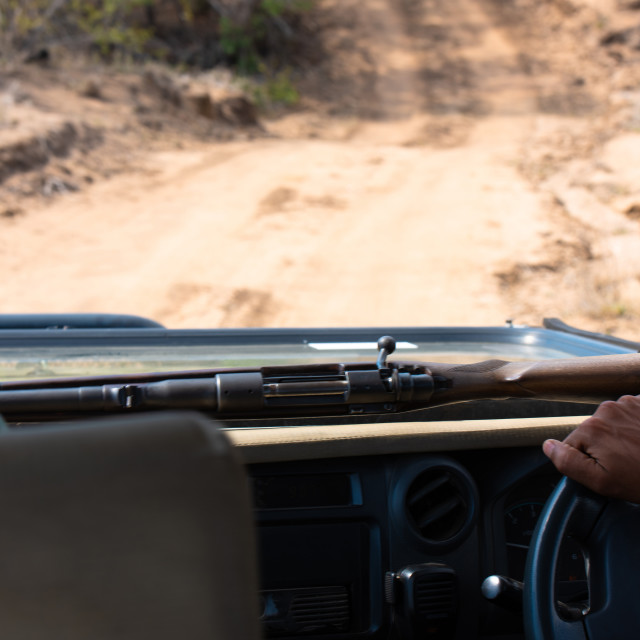 """Safari guide driving with his rifle in the bush of South Africa"" stock image"
