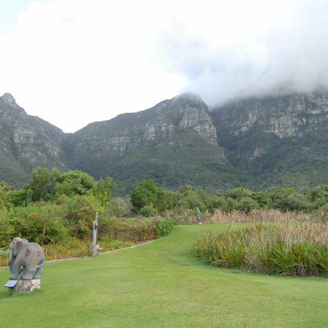 """Cape Town South Africa Kirstenbosch Botanical Gardens:"" stock image"