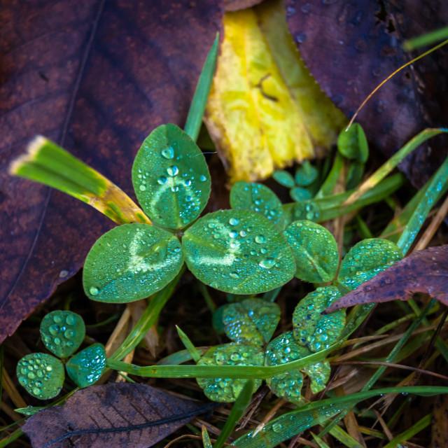"""""""Luck of the Irish"""" stock image"""