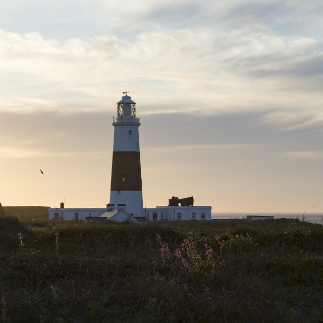 """""""Quesnard lighthouse on Channel Island of Alderney at sunset"""" stock image"""