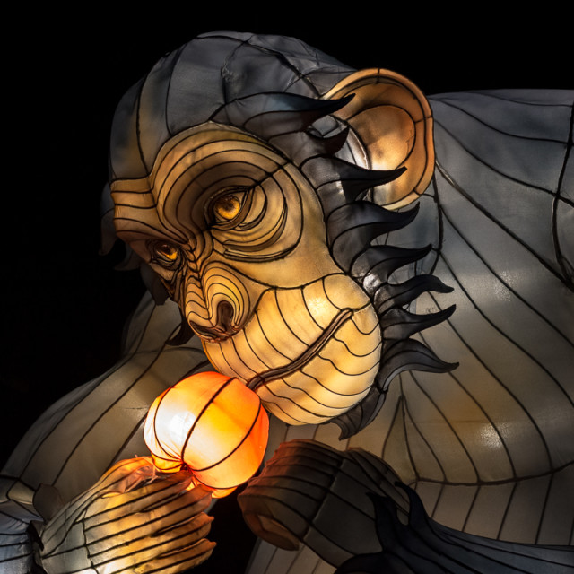 """Chimpanzee Lantern"" stock image"