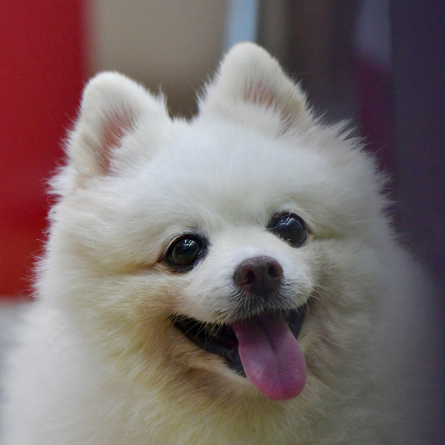 """Happy dog"" stock image"