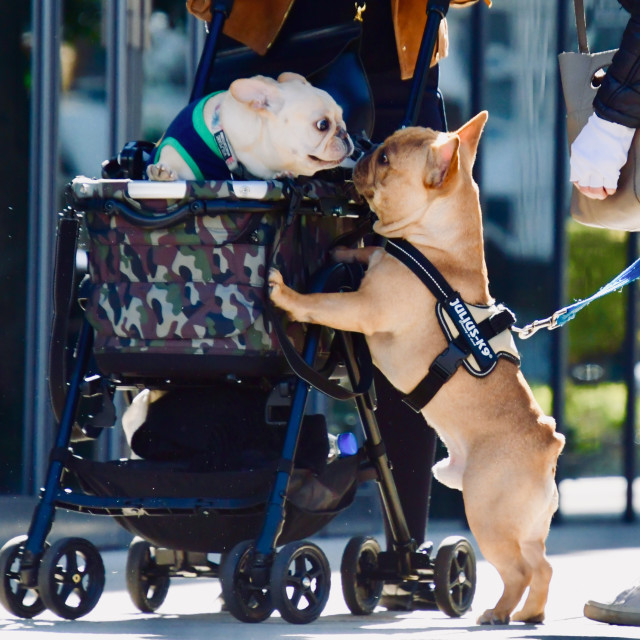 """""""Dogs in love"""" stock image"""