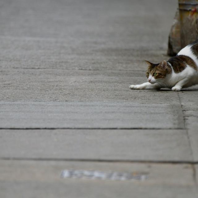 """""""Cautious cat"""" stock image"""
