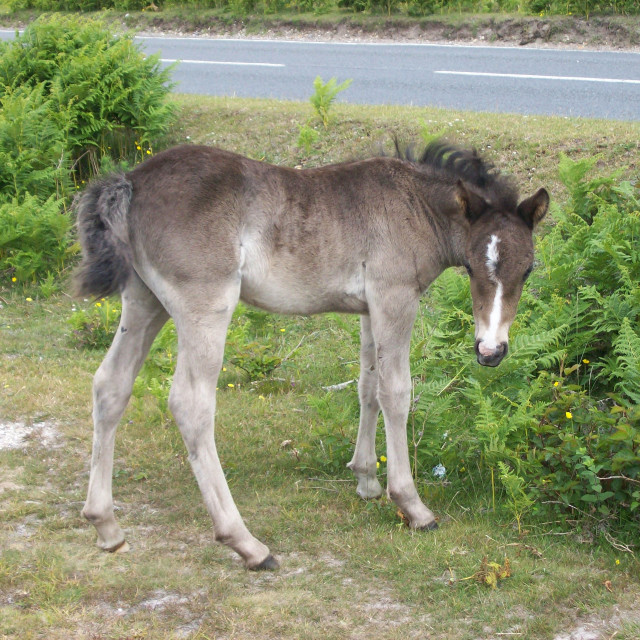 """Grey Foal"" stock image"