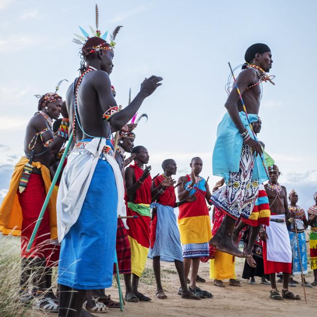 """Portrait Samburu tribe members jumping at traditional wedding dance at dusk,..."" stock image"