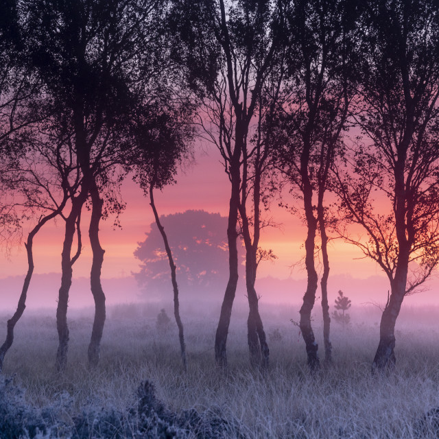 """A misty cool sunrise over Strensall Common near York, North Yorkshire, UK."" stock image"