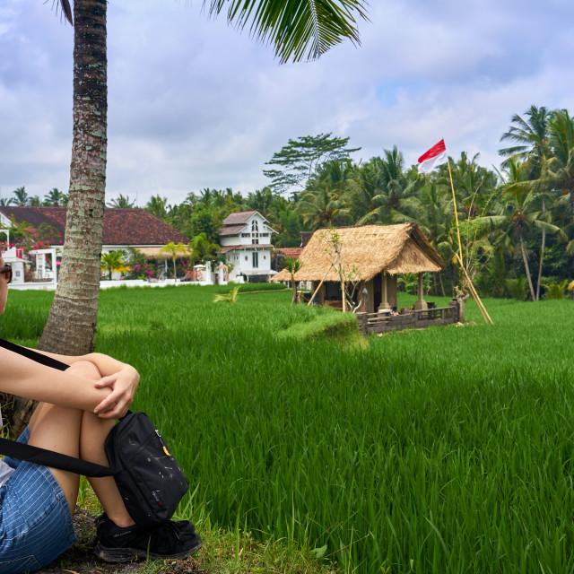 """Looking over green rice fields on the Sari Organic Walk in Ubud."" stock image"