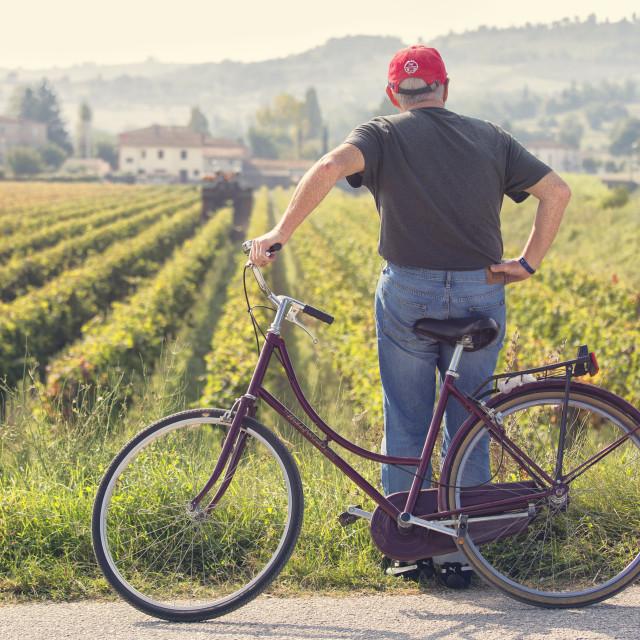 """Vineyards of Sagrantino di Montefalco in autumn, Umbria, Italy"" stock image"