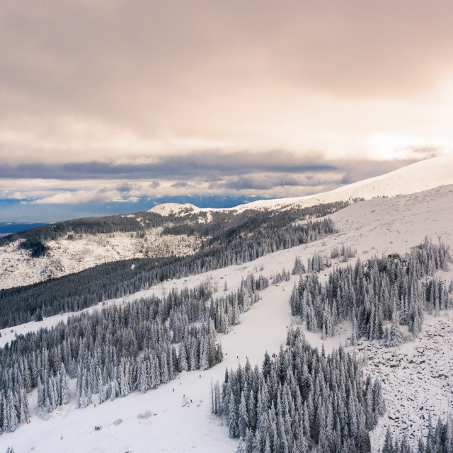"""""""Aerial view of snow covered forest at sunset."""" stock image"""