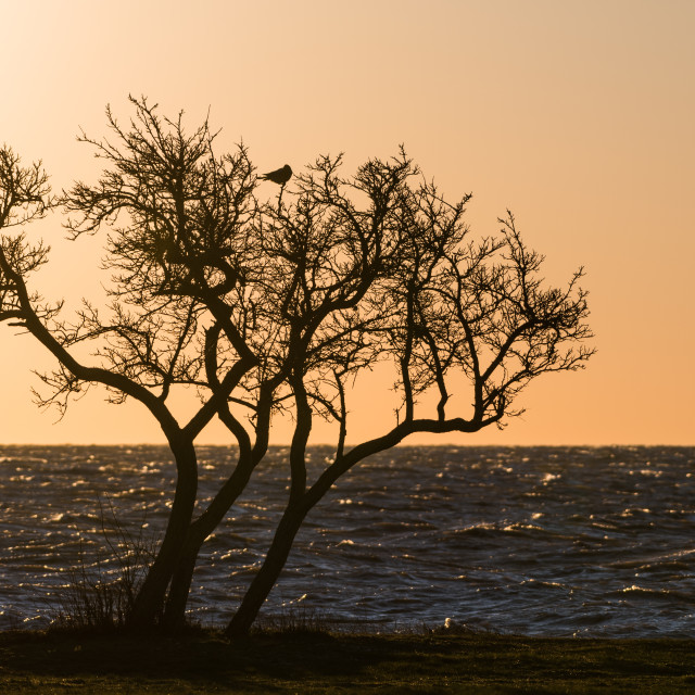 """Tree silhouette with a bird in the top"" stock image"