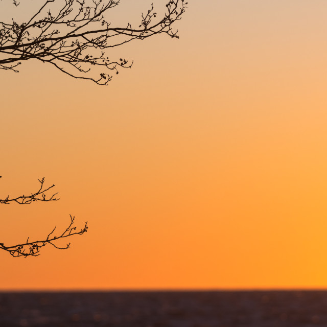 """Tree branches by sunset"" stock image"