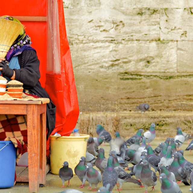 """""""Pigeon Show Istanbul"""" stock image"""
