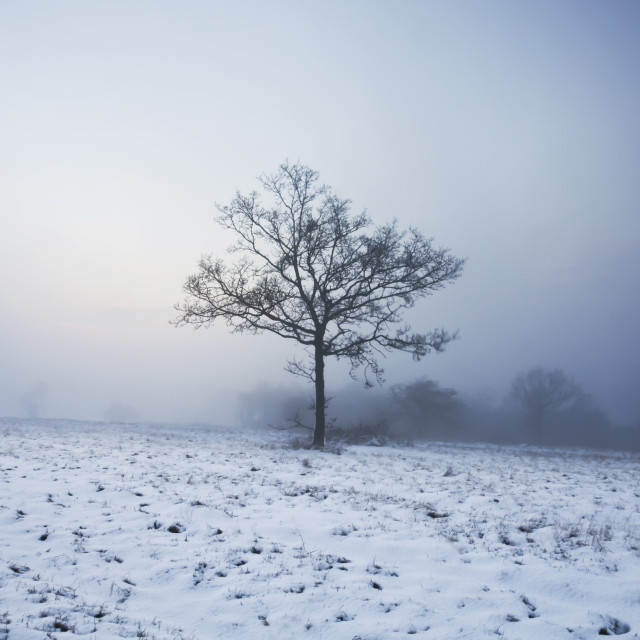 """Lone Tree in Winter"" stock image"