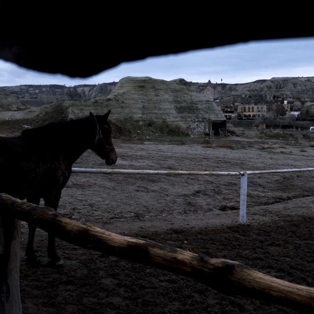 """""""Cappadocia horse"""" stock image"""