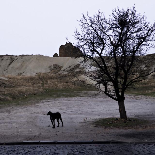 """Cappadocia dog"" stock image"