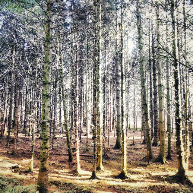 """""""Trees in the Afan Valley"""" stock image"""