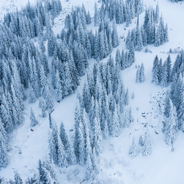 """""""Aerial view of the forest at winter."""" stock image"""