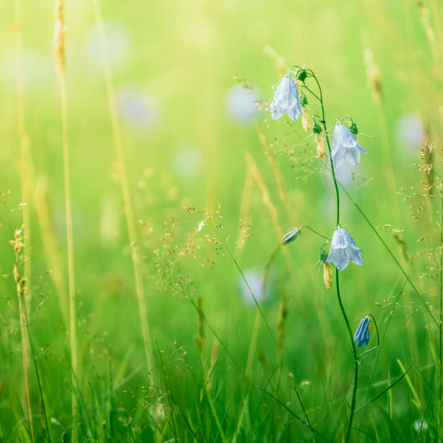 """""""Summer Grass And Flowers"""" stock image"""