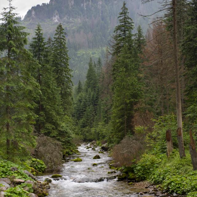 """path in the rain in the valley of Koscieliska, Tatra Mountains, Poland"" stock image"