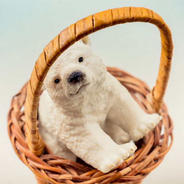 """Polar bear model seen in basket"" stock image"