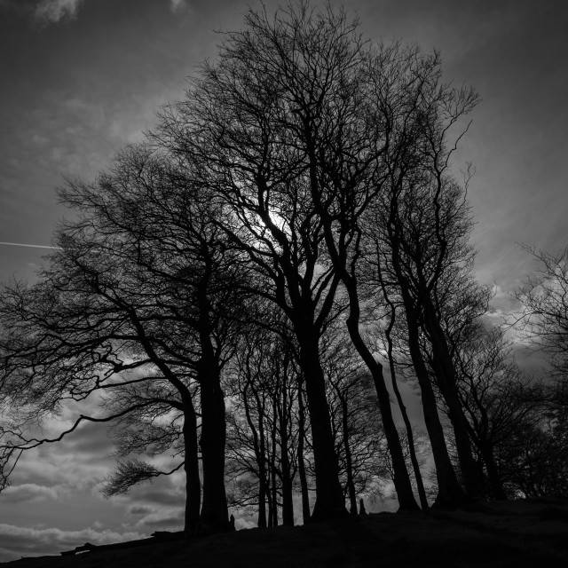 """Beeches on Gerrard's Hill, near Beaminster, Dorset"" stock image"