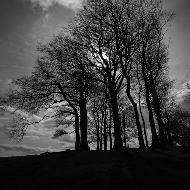 """Beech clump on Gerrard's Hill, Beaminster, Dorset."" stock image"