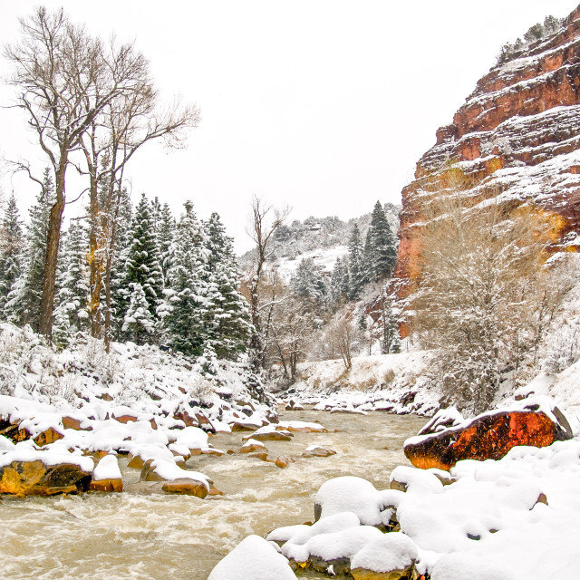 """""""Uncompaghre River in Snow"""" stock image"""