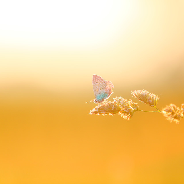 """A beautiful butterfly is resting, but it will fly away"" stock image"