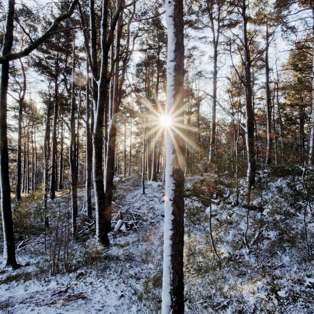 """Sunstar through winter forest"" stock image"