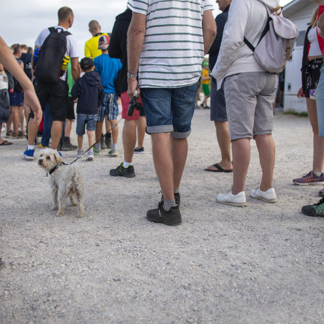 """""""a long queue of people, focused on dog"""" stock image"""