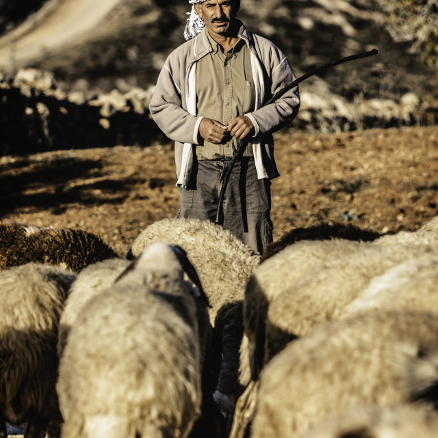 """West Bank Shepherd"" stock image"