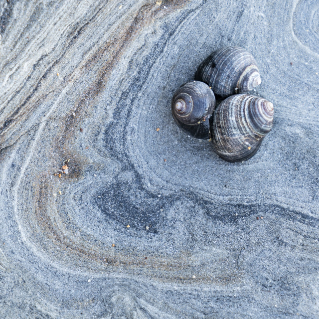 """""""A trio of shells"""" stock image"""