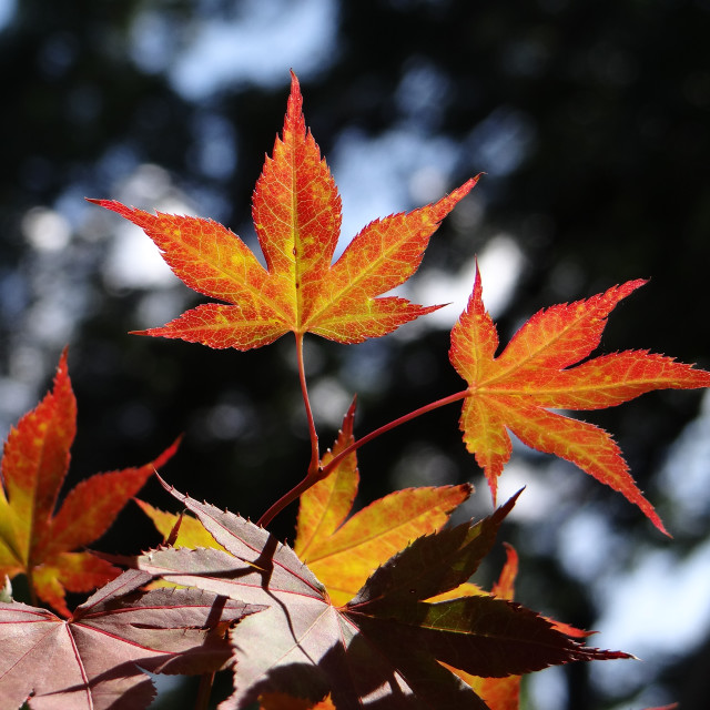 """Fall"" stock image"