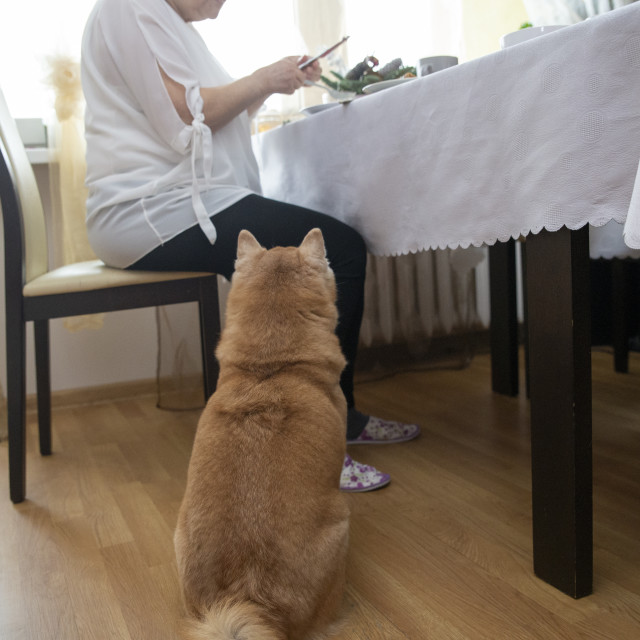 """""""close up on dog near the table waiting for the food"""" stock image"""