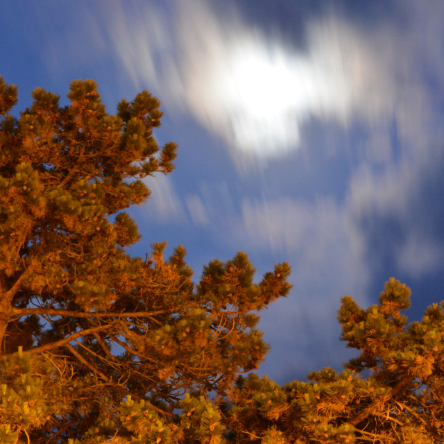"""Pine Tree and Moon"" stock image"