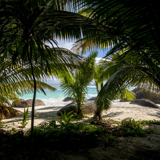"""Tropical beach"" stock image"